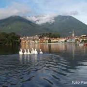 Il Lago di Mergozzo e le oche